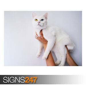 COOL-WHITE-CAT-AE910-Photo-Picture-Poster-Print-Art-A0-A1-A2-A3-A4
