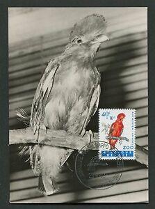 Charmant Belgique Mk 1962 Zoo Oiseaux Birds Felsenhahn Maximum Carte Maximum Card Mc Cm D3866-afficher Le Titre D'origine DernièRe Technologie