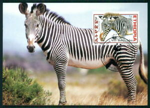 Specialty Philately Selfless Ethiopia Mk Wwf Fauna Grevy`s Zebra Maximumkarte Maxi Card Mc Cm Ar27 Sturdy Construction