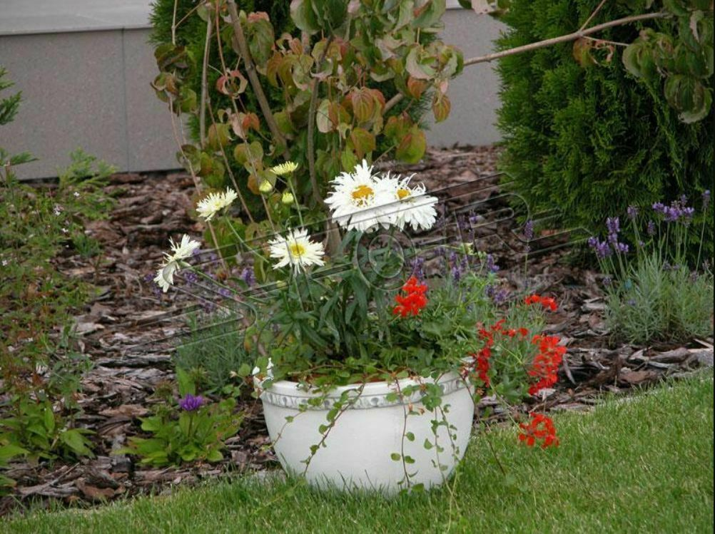 Cesta de flores flores jarrón tarro Jardín Terraza decoración estatua personajes s204037