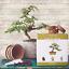 thumbnail 6 - Nature'S Blossom Bonsai Tree Kit - Grow 4 Types Of Bonsai Trees From Seed. Indoo