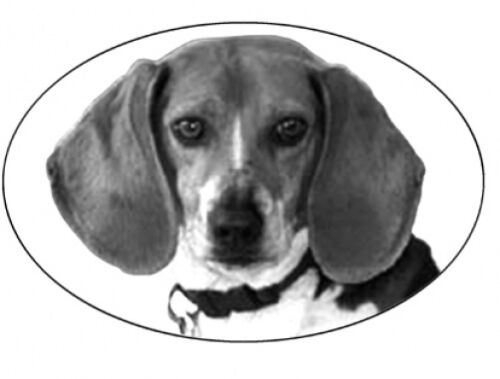 """4/""""X6 BEAGLE static cling etched glass window decal"""