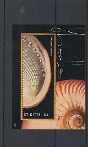 Saint-Kitts-2012-Gomma-integra-non-linguellato-Conchiglie-1v-S-S-MARINE-CONCHIGLIE-HALIOTIS-ASININA