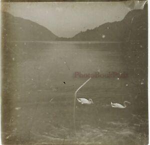 Lac-Con-Dei-Cygnes-c1910-Foto-Stereo-Placca-Da-Lente-VR12hd