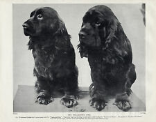 SUSSEX SPANIEL TWO NAMED CHAMPION DOGS OLD 1934 DOG PRINT