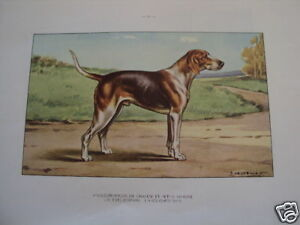 COMPOSITION-CASTELLAN-CHIEN-CHASSE-ANGLO-FRANCAIS