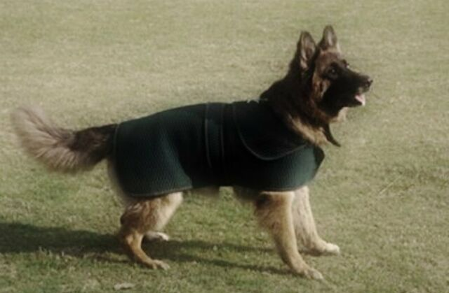 TuffRider Thermo Manager Dog Blanket