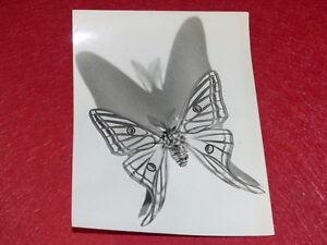 PHOTOGRAPHIE-PIERRE-AURADON-ARGENTIQUE-1940-50-Papillon-Isabella-21x16