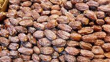 PHOENIX DACTYLIFERA PALESTINA 4 semi seeds Palma da dattero  Date palm Palestine