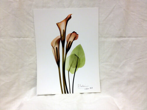 "Albert Koetsier X-Rayograph Print Hand Signed /& Numbered /""Three Callas/"""