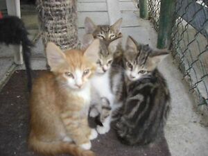 FEED A Cute CYPRUS CATKITTEN FOR CHARITY - <span itemprop='availableAtOrFrom'>Hope Valley, United Kingdom</span> - FEED A Cute CYPRUS CATKITTEN FOR CHARITY - Hope Valley, United Kingdom