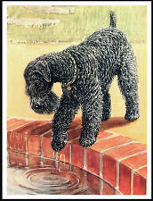 Kerry Blue Terrier Looking Into Pond Lovely Dog Print Poster