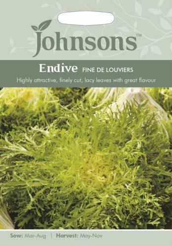 Johnsons graines-paquet illustré-CHICORÉE frisée FINE de LOUVIERS 1000 graines
