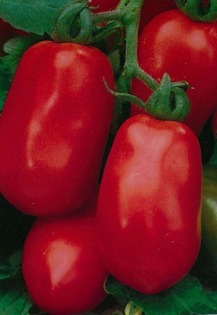 Vegetable - Tomato - Roma - 100 Seeds - Economy