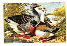 POULTRY chickens fowl raising 162 old books breeding BACKYARD egg SURVIVAL SKILL