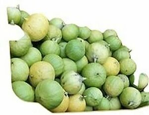 Benincasa-Fistulosa-Ash-Gourd-Winter-Melon-10-seeds-organic-from-our-farm