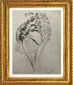 Old-drawing-cabinet-of-curiosites-study-anatomy-skeleton-man-1