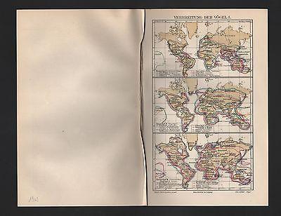 Trendmarkierung Landkarten Map 1909: Verbreitung Der VÖgel. I-iii. Vogel Körperteile Der Vögel.