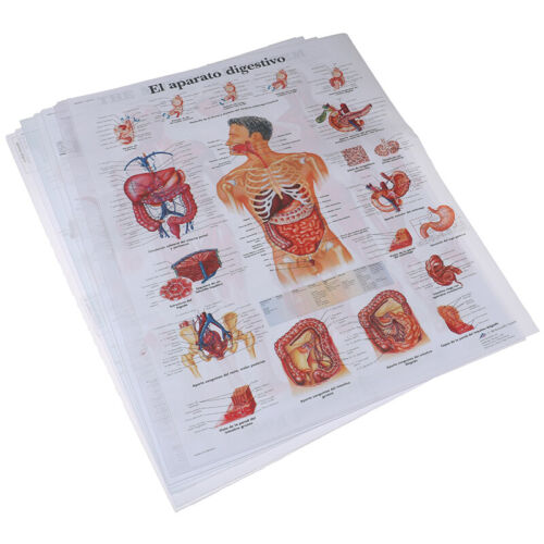 Human Anatomy Muscles System Poster Print Body Map Silk Painting Wall Pictu JR8Y