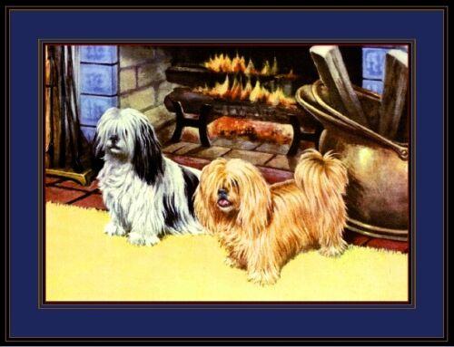 English Poster Print Shih Tsu Llaso Apso Dog Dogs Puppies Puppy Art Picture