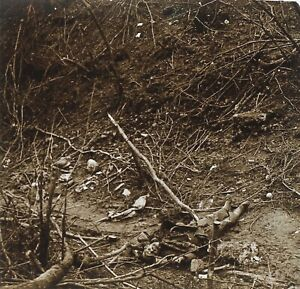 Cadavere Senegalese Grande Guerre 14-18 Francia Foto PL51L14n Placca Vintage