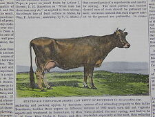 The Cultivator & Country Gentleman, in-text illustration #27 Jersey Cow