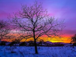 STUNNING-TREES-COLOURFUL-EVENING-SUN-CANVAS-PICTURE-POSTER-PRINT-UNFRAMED-927