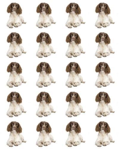 968 personnel Spaniel Dog Birthday Cupcake Toppers x20 papier de riz ou de givrage