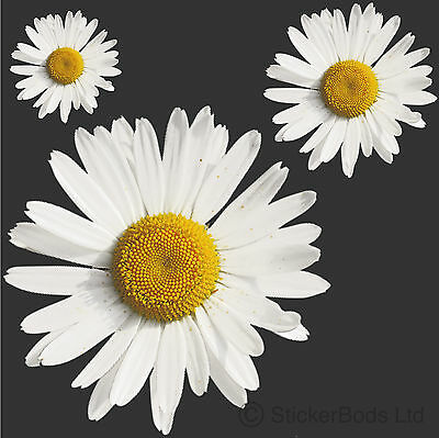 36x WHITE DAISY STICKERS / DECALS for Car | Wall | Home