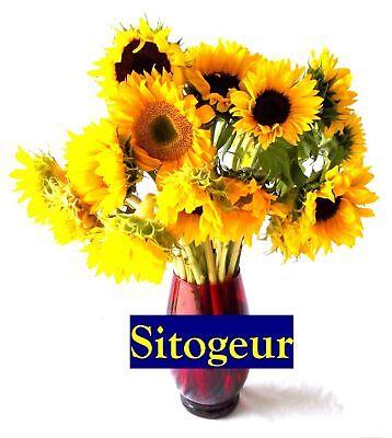 Sitogeur