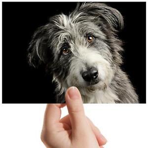 Lurcher-Dog-Greyhound-Puppy-Small-Photograph-6-034-x-4-034-Art-Print-Photo-Gift-15784