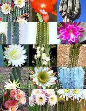 CEREUS CACTUS MIX, rare garden night cacti exotic desert succulent seed 50 seeds