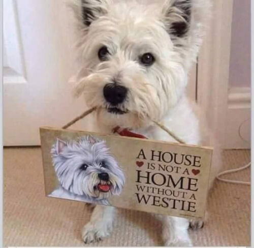 """# Westhighland Terrier # """"A House is Not a Home Without a Westie"""" Dog Sign"""