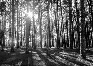 Sunny Spring Forest Morning Trees Photo Wallpaper Wall