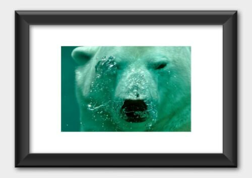Polar Bear Underwater Ocean Sea Animal Poster Black Frame White 29.7x42cm A3