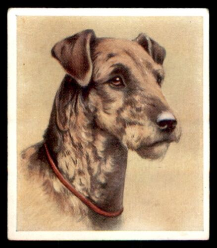 """The Airedale No Godfrey Phillips """"Our Dogs"""" 1939 18"""