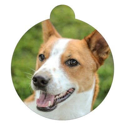 Basenji Breed Picture Pet Id Tag Complete Reeks Artikelen