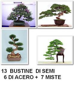 SEMI-PER-BONSAI-13-BUSTINE-6-DI-ACERO-MISTE-7-BUSTINE-VARIE