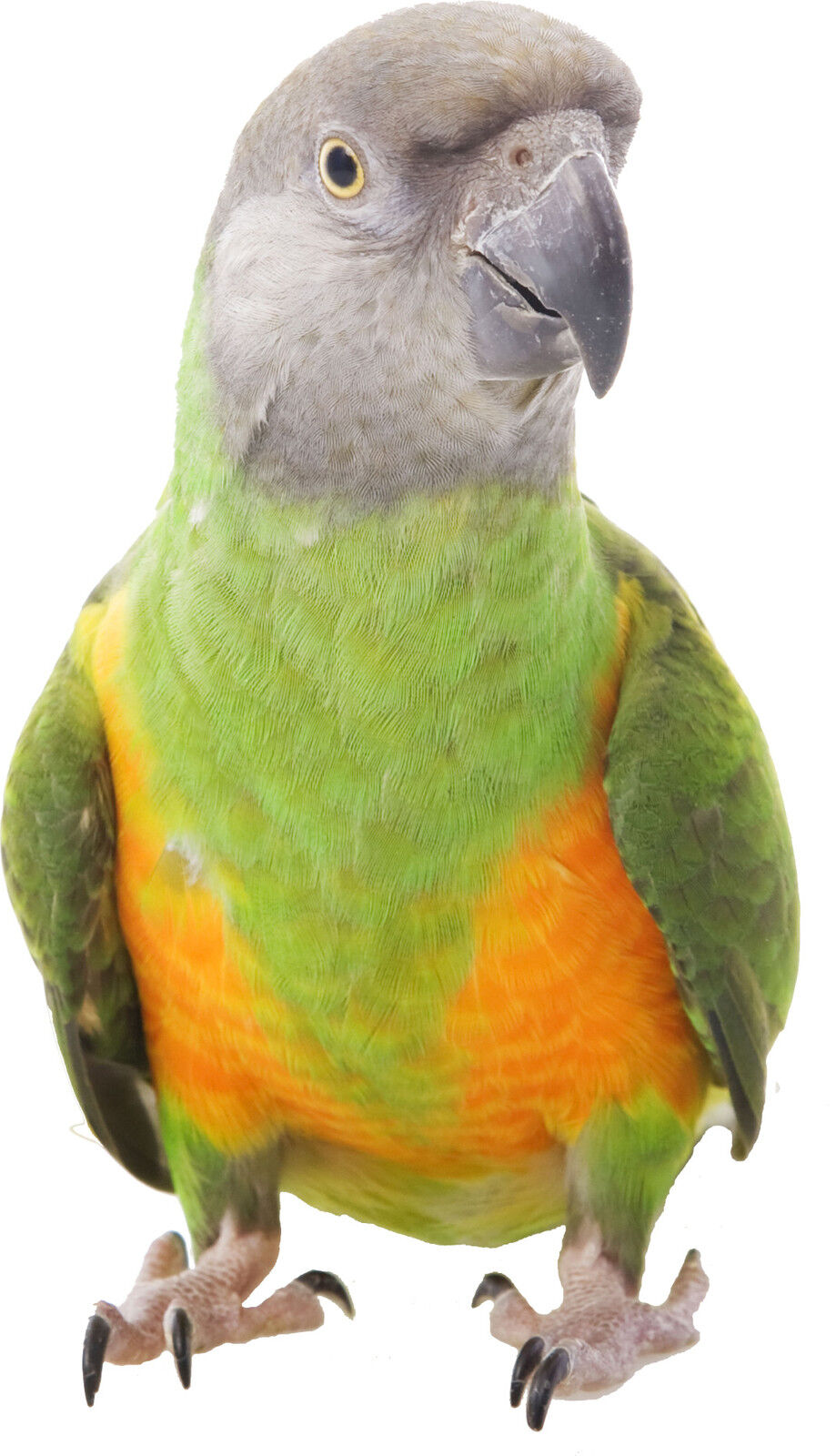 Aufkleber Tier Papagei (Mehrere Größen)
