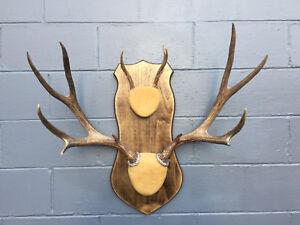 181230-AA Lot No Medium Set of Taxidermy Quality Mule Deer Antlers