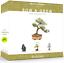 thumbnail 9 - Nature'S Blossom Bonsai Tree Kit - Grow 4 Types Of Bonsai Trees From Seed. Indoo