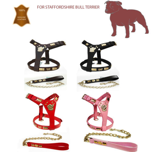 NEW STAFF STAFFORDSHIRE BULL TERRIER LEATHER DOG HARNESS /& LEAD SET BRASS KNOT