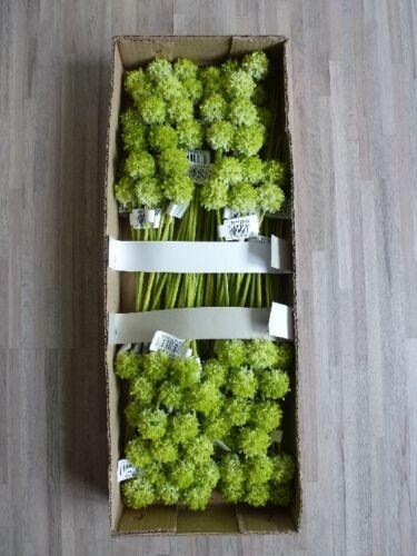 Set Pick Blüte Kunstblume 32 cm grün 301122-50 F16 72 x Allium 72tlg