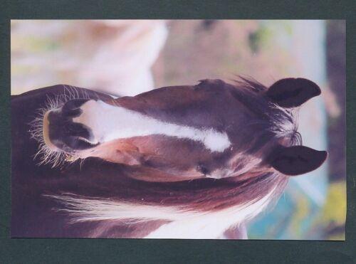 10734 AK Pferd auf der Weide