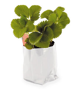 vivosun 1 2 3 5 gallon polythene plant pot plastic grow bag potato root pouch ebay. Black Bedroom Furniture Sets. Home Design Ideas