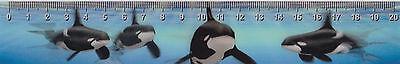 3d -wackel- Lineal: Schwimmende Orcas - Orcinus Orca - Die Größten Delfine