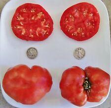 Andrew Rahart/'s Jumbo Red 40 Seeds Beefsteak Organic Heirloom Tomato Seeds