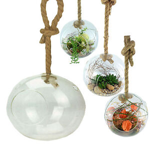 xxl glaskugel zum h ngen terrarium h ngevase deko pflanzen h ngetopf 20 cm. Black Bedroom Furniture Sets. Home Design Ideas