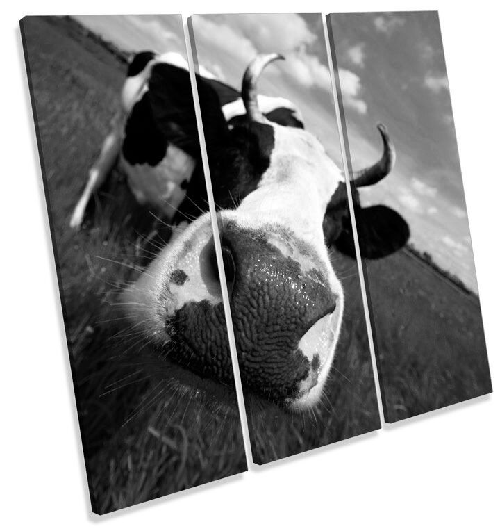 Funky Cow Face B&W TREBLE CANVAS Wand Kunst Square Drucken Bild