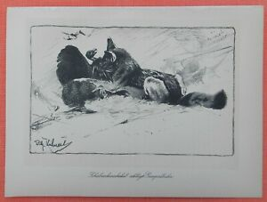 Canonnières Chacal Canis Mesomelas Wilhelm Kuhnert Afrique Lithographie 1920-akal Canis Mesomelas Wilhelm Kuhnert Afrika Lithographie 1920 Fr-fr Afficher Le Titre D'origine